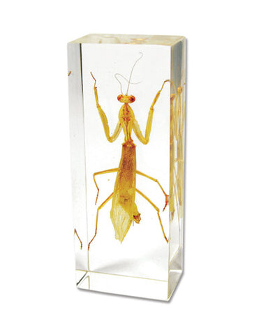 Mantis Encased in Acrylic Block - Medium