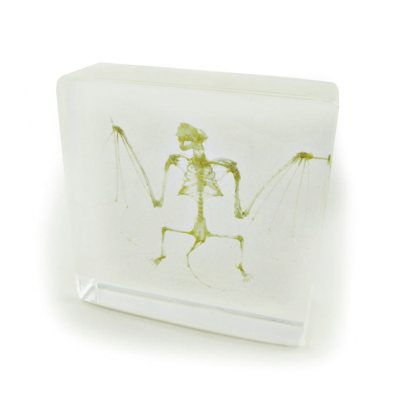 Bat Skeleton Real Encased In Acrylic - Small