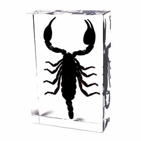 Black Scorpion Encased in Acrylic Resin Block - Large