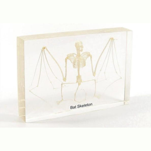 Bat Skeleton Real Encased In Acrylic - Large