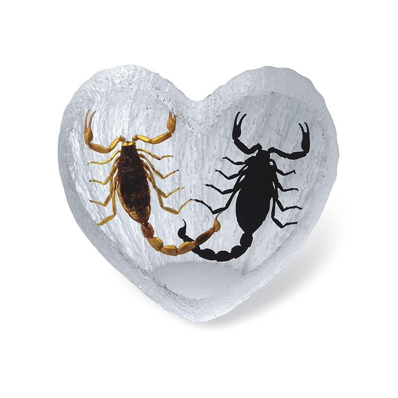 Black Emperor Scorpion and Real Bark Scorpion Heart Shape Desktop