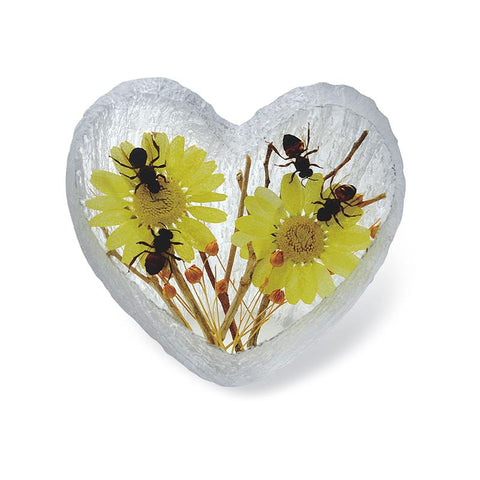 Honeybee Heart-shape Desk Decoration Real Honeybees