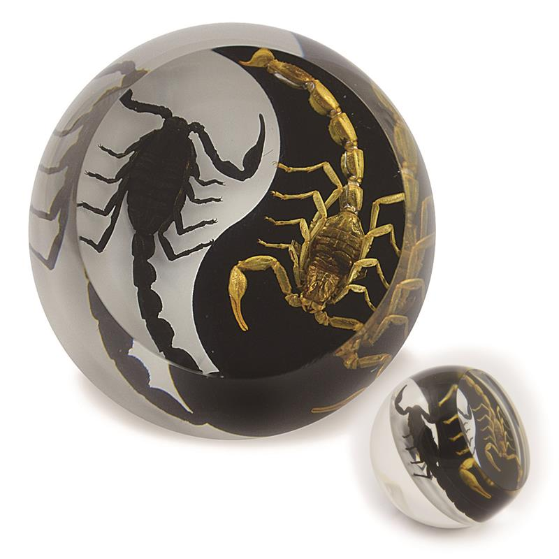Black Emperor and Bark Scorpion Yin-Yang  Paperweight Cylinder Shape Style 1