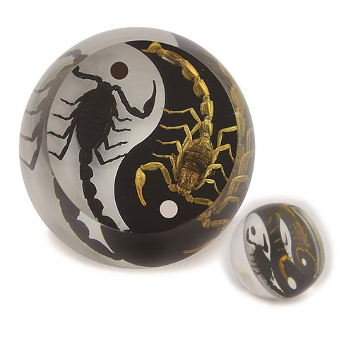 Black Emperor and Bark Scorpion Yin-Yang  Paperweight Cylinder Shape Style 2