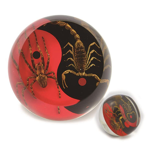 Real Wolf Spider and Bark Scorpion Red and Black Yin-Yang Scorpion Paperweight Cylinder Shape Style 2
