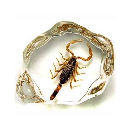 Arizona Bark Scorpion Encased in Acrylic Resin - Small