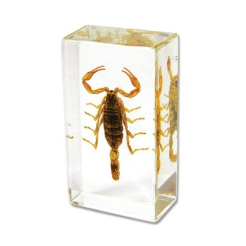 Bark Scorpion Encased In Acrylic Resin - Small