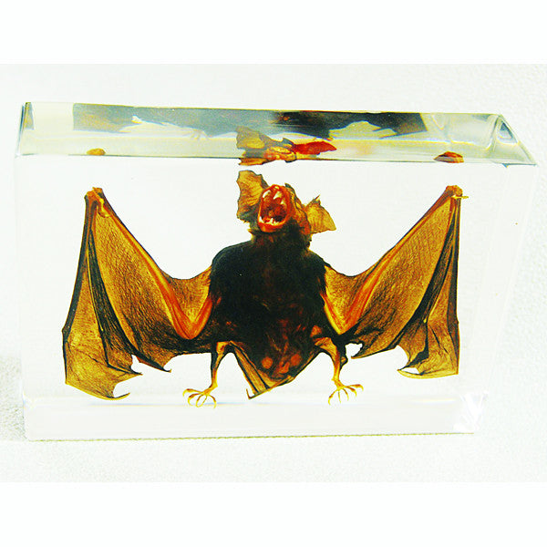 Bat Real Encased In Acrylic - Large