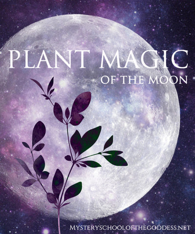 Plant Magic of the Moon E-Course