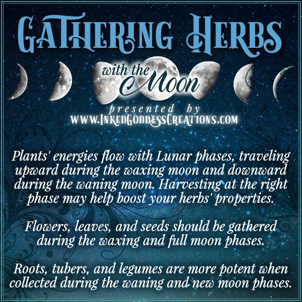 Gathering Herbs with the Moon