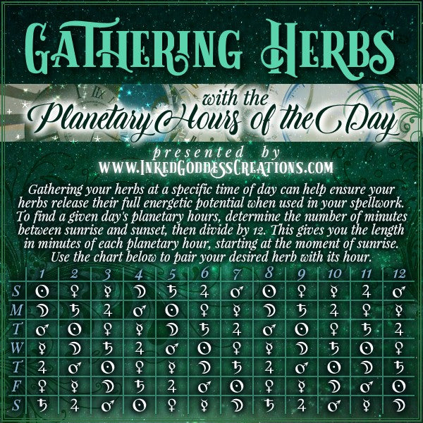 Gathering Herbs with the Planetary Hours of the Day