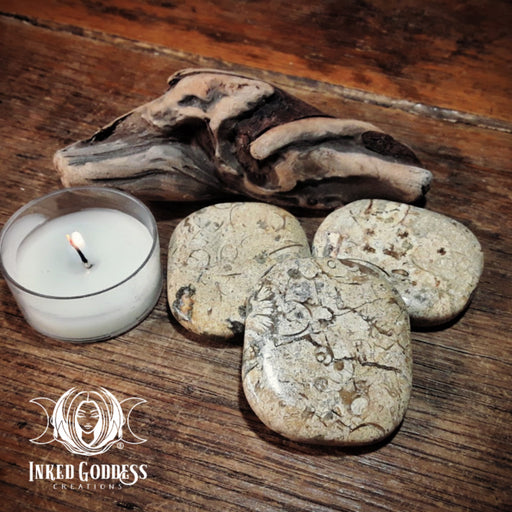 Fossil Coral Palm Stone for Grounding & Ancient Wisdom