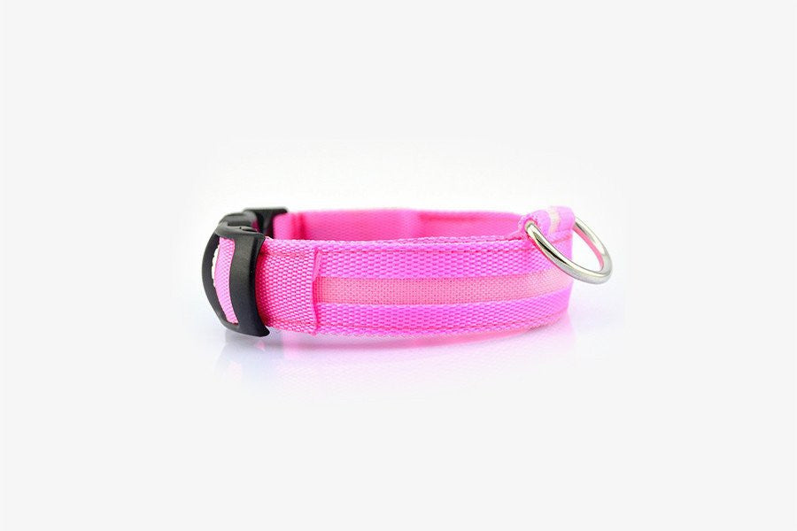 Bright Doggie Collar