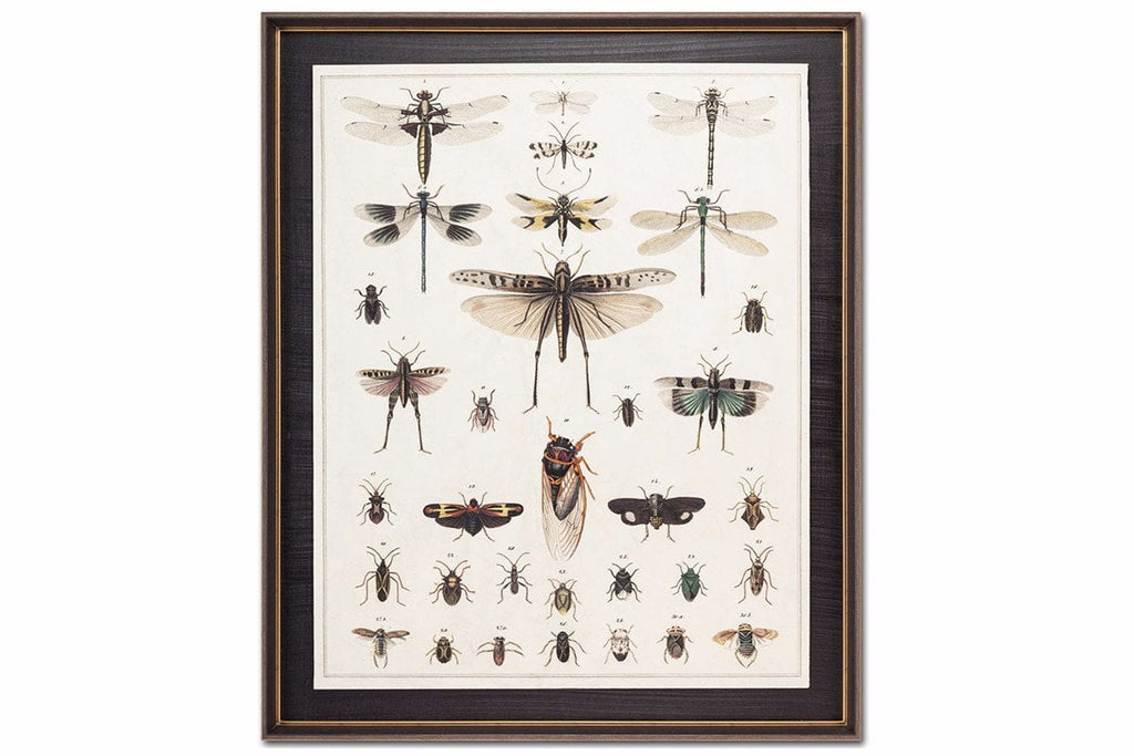 Dragonfly Display Wall Art  | Framed Art | Jordans Home