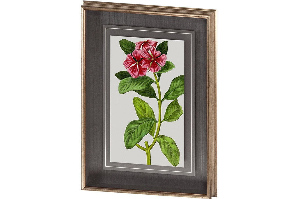 Vintage Garden Varieties IX Artwork  | Framed Art | Jordans Home