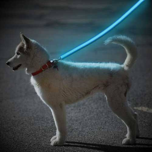 Product GiveAway - Led Glow Safety Dog Leash Offer