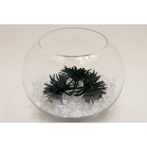 Fish bowl wedding centrepiece with Black frilly Gerbra and choice of bear   collect and return hire - Wedding Sparkle - wedding - event - hire