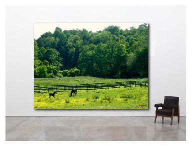 Nature Photography, Art Print, Horse Photo, Mother and Foal Photography, Four Seasons Summer - Gallery360 Designs