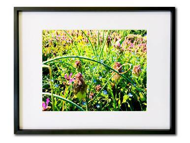 Nature Photography, Botanical Art Print, Spring Wildflowers, Garden Wall Art Print - Gallery360 Designs