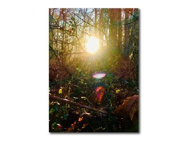 Nature Photography, Sunlight Sunrise Photography, Forest Photo, Wall Art Print, Four Seasons Summer - Gallery360 Designs