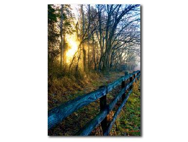 Nature Photography, Art Print, Sunrise Photography, Wall Art Print, Four Seasons Spring - Gallery360 Designs