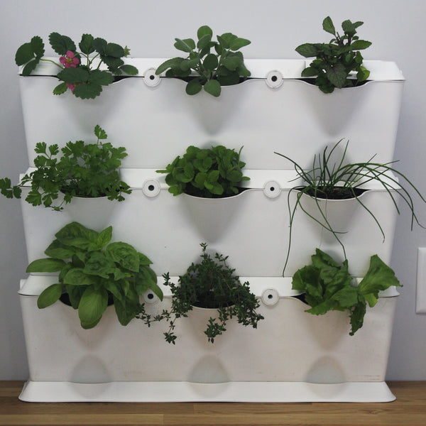 Vertical 3 - Edible Green Wall