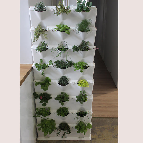 Vertical 8 - Edible Green Wall