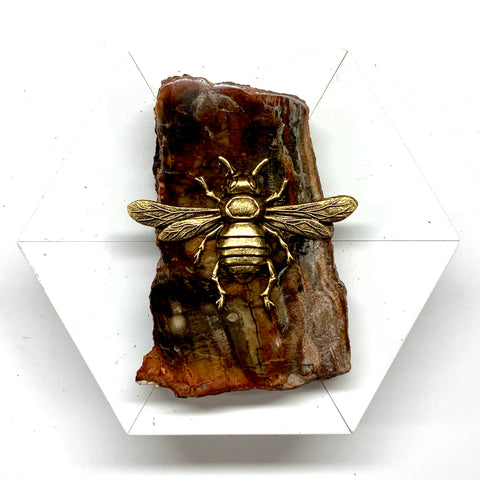 Lacquered Frame with Italian Bee on Petrified Wood Piece (4.5