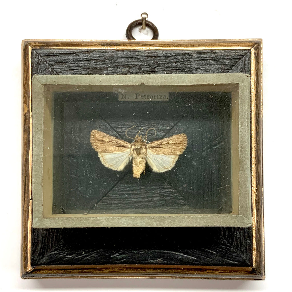 Bourbon Barrel Frame with Moth from 19th Century Collectors Cabinet (4