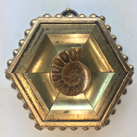 Gilt Frame with Ammonite Fossil (3