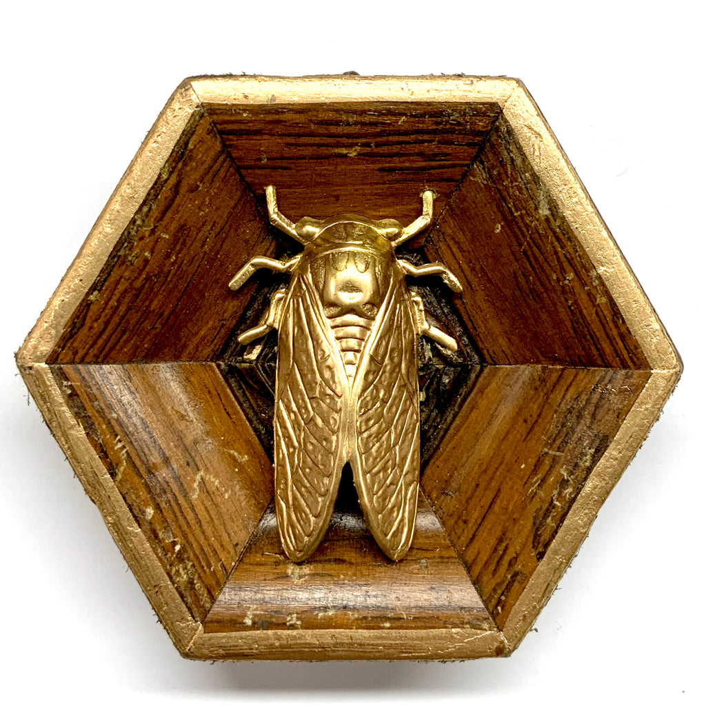 Wooden Frame with Cicada (3.25