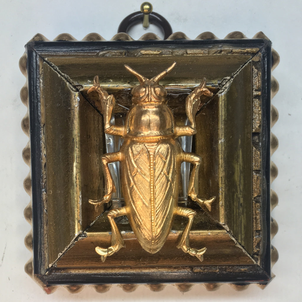 Gilt Frame with Beetle (2.5