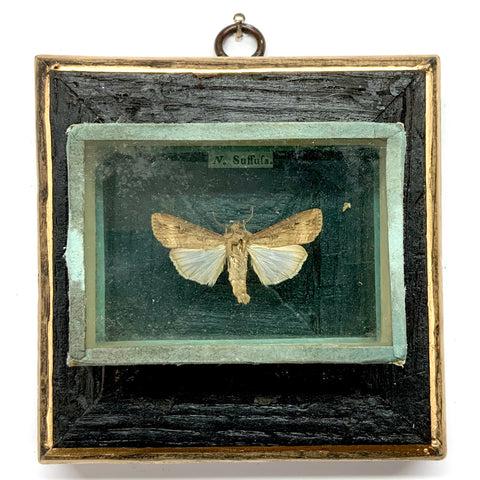 Bourbon Barrel Frame with Moth from 19th Century Collectors Cabinet (4.25