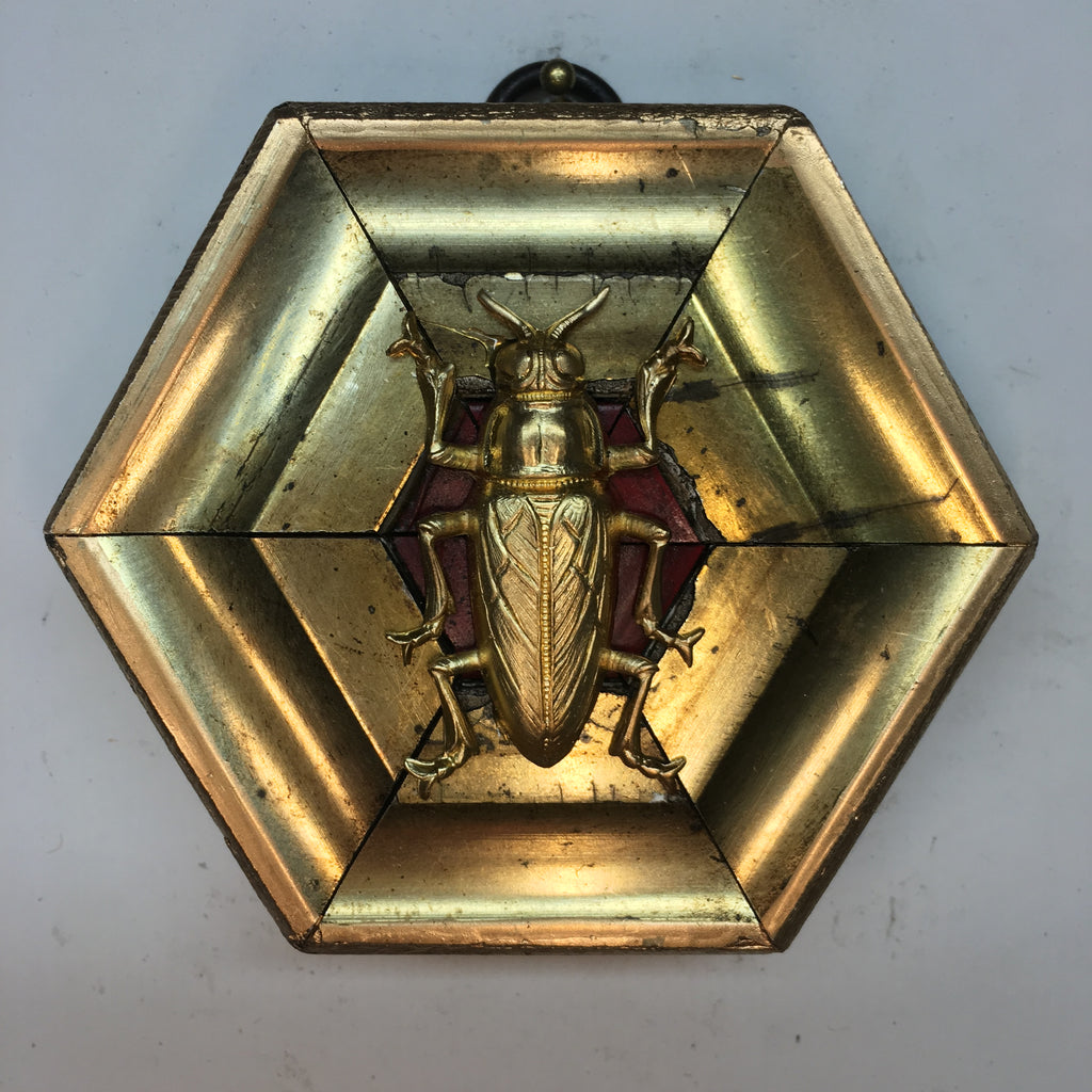 Gilt Frame with Beetle (3.5
