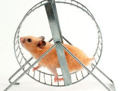 rat wheel image