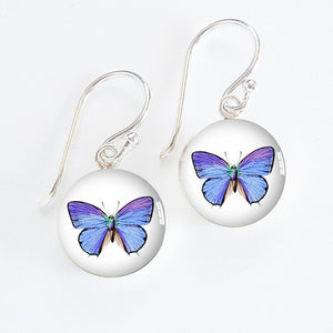 Common Blue Butterfly Meniscus Earrings