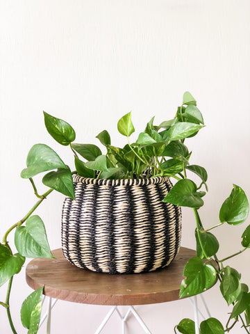 Stripe Planter Basket