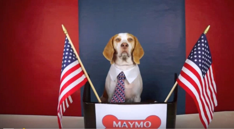 Maymo The Dog Running For President Of The USA