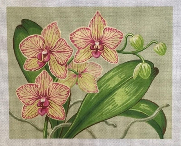 NEEDLEPOINT Handpainted Labors of Love ORCHIDS 13M or 18M