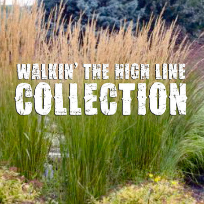 Walkin the High Line Collection