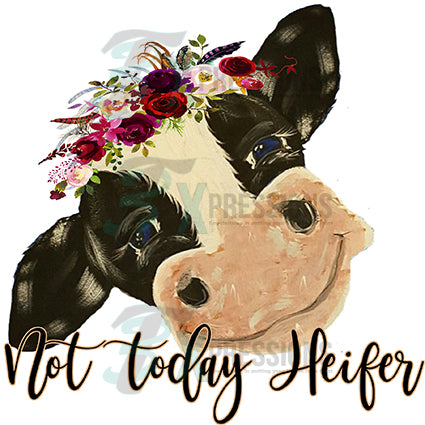 Not Today Heifer 3t Xpressions