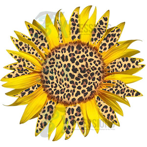 Leopard and yellow Sun flower