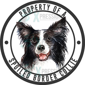 Property of a Spoiled Border Collie