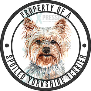 Property of a Spoiled Yorkshire Terrier
