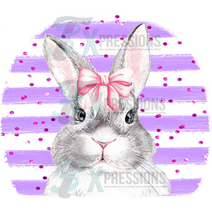 Gray Bunny with purple striped background