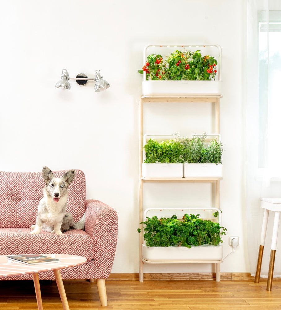 Grow More Food at Home Using Vertical Space