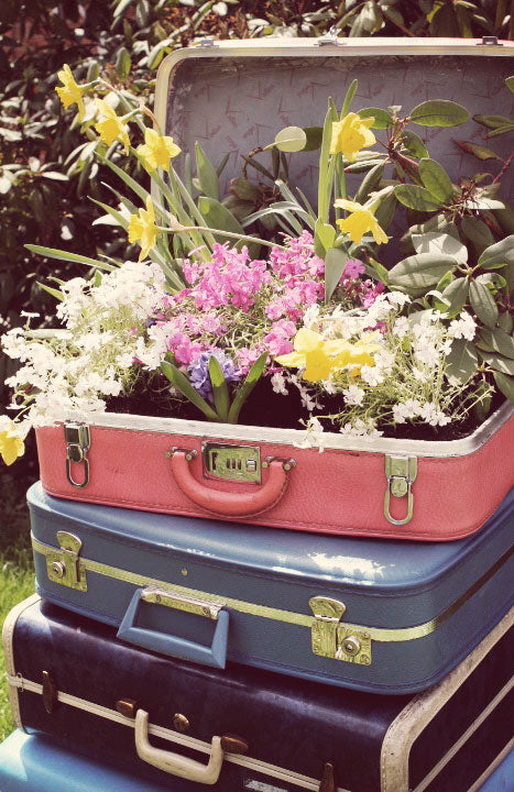 10 Crazy Plant Pot Alternatives That Are Just Too Cute