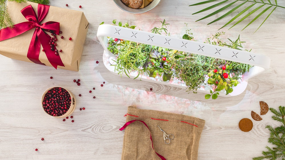 Gift Ideas - Indoor Herb Garden For Those Who Love to Cook