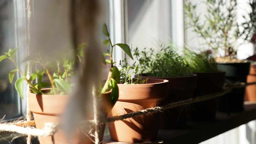 Gardening Indoors vs. Gardening Outside - Does It Really Make a Difference?