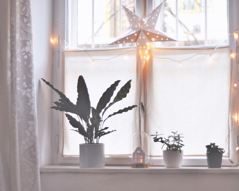 Winter Houseplant Care: 6 Quick Tips